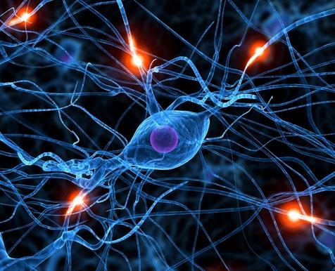 nerves system